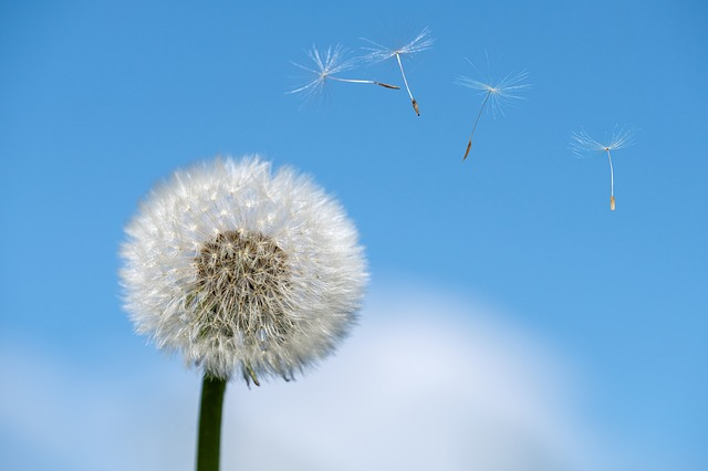 Keeping Allergies At Bay With These Simple Tricks